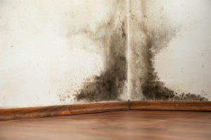 mold removal salina, mold damage salina, mold damage cleanup salina